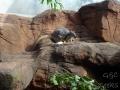 Wildlife Sydney Zoo Kangourou  7