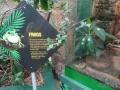 Wildlife Sydney Zoo grenouilles