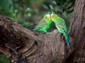 Wildlife Sydney Zoo oiseau 7