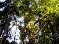 arbres hauts 2 kondalilla falls