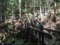 escaliers vers la randonnée kondalilla falls