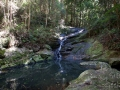 ruisseau en foret kondalilla falls