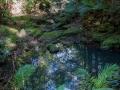vegetations kondalilla falls
