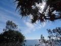 palmier et mer noosa